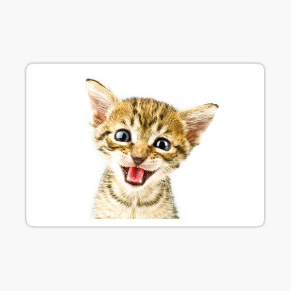 Kitten, Cat Sticker