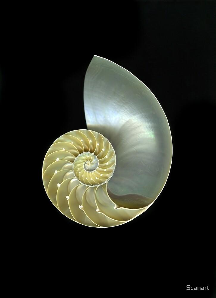 Nautilus by Scanart