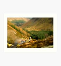 Model Countryside - Near lake Vyrnwy Art Print