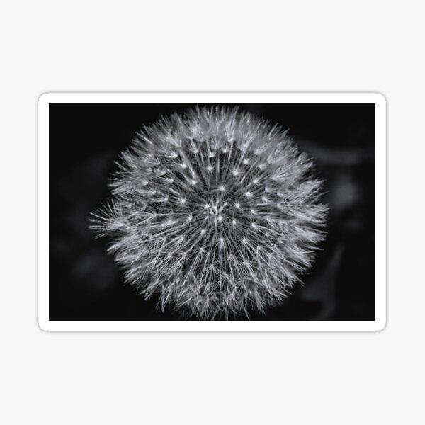 Dandelion Sticker