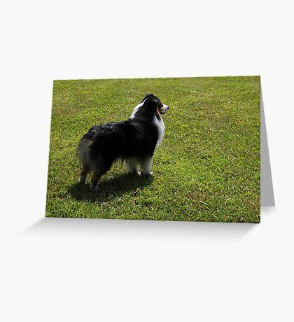 Black Tri-Color Australian Shepherd Greeting Card