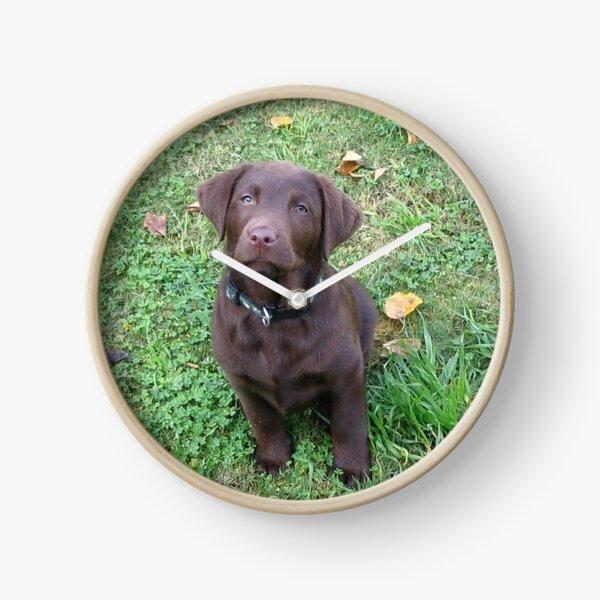 chiot chocolat labrador retriever Horloge