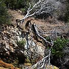"""Nature's """"S"""" Curve by CarolM"""