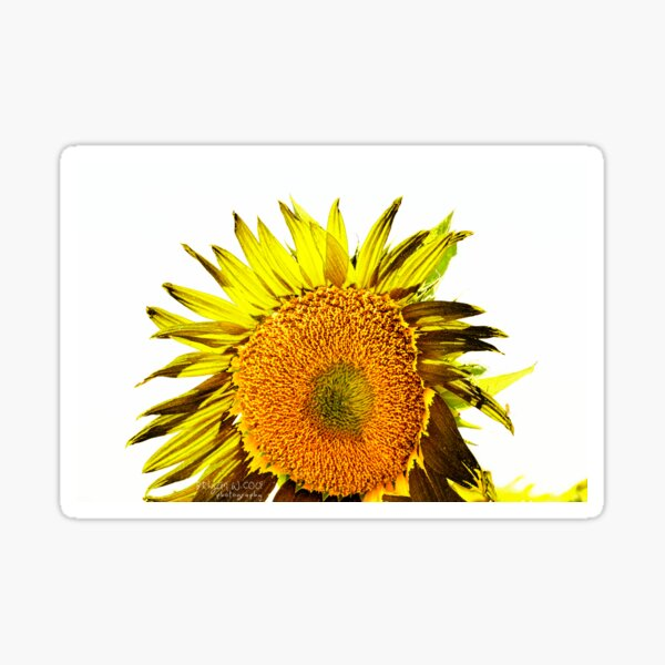Sunflower Summer Day Sticker