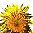 Sunflower Summer Day by Bryan W. Cole