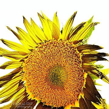 Sunflower Summer Day by BryanSoCal