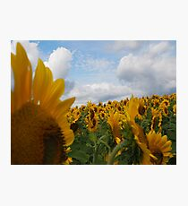 Sunflower Garden Photographic Print