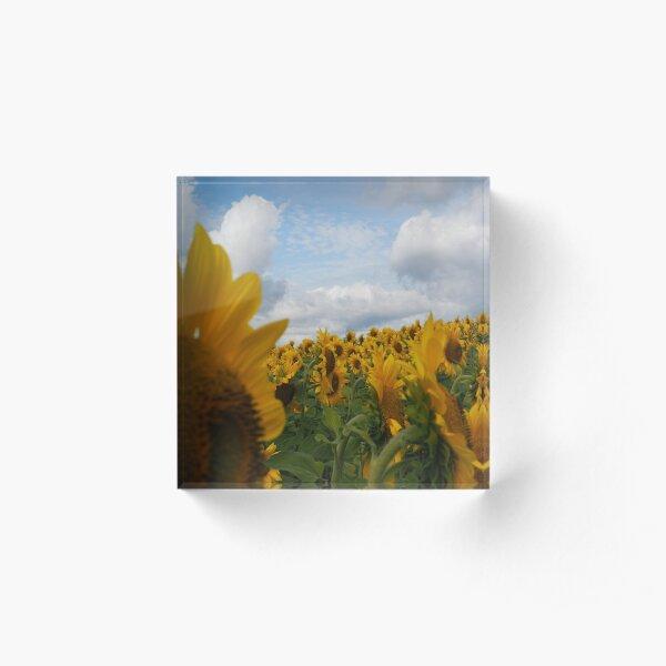 Sunflower Garden Acrylic Block