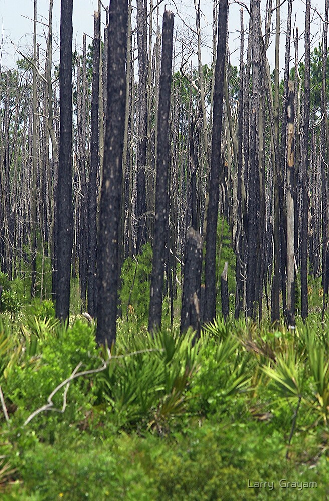 Burned forest by Larry  Grayam