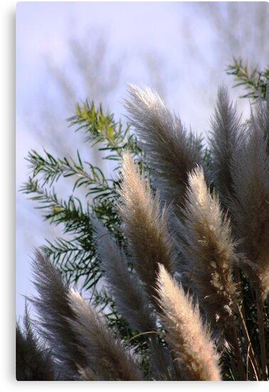 pampus grass by Karen E Camilleri