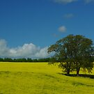 Summer on the South Downs by Chris Jessup
