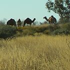 Wild Camels by Kay Cunningham
