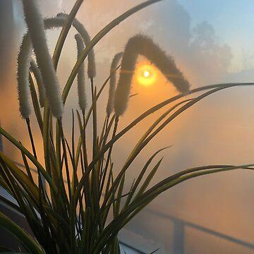 Foggy Sunrise from my balcony by rozmcq