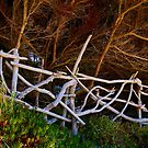 Driftwood Fencing by Barbara  Brown