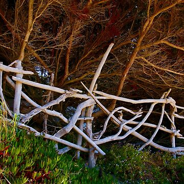 Driftwood Fencing by lenzart