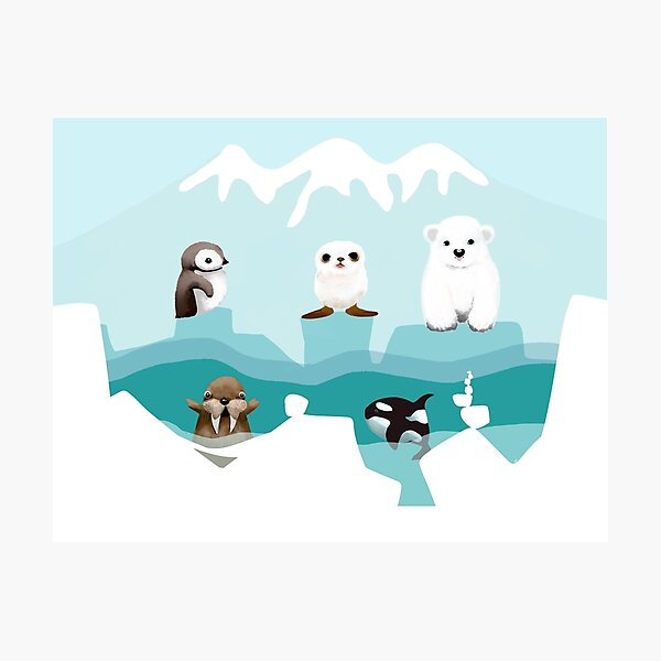 Arctic Friends Photographic Print