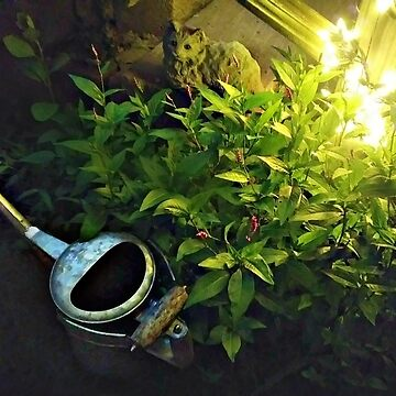 Watering Can at Rest, Midnight by My Front Steps by amberwayne52