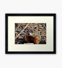 Groundhog II Framed Print