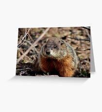 Groundhog II Greeting Card