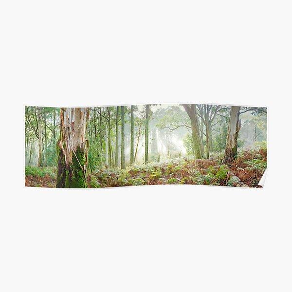 Woodland Morning, Mt Macedon, Victoria, Australia Poster