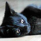 Fast Moving, Feisty Feline Furball - Meet Haggis! by BlueMoonRose