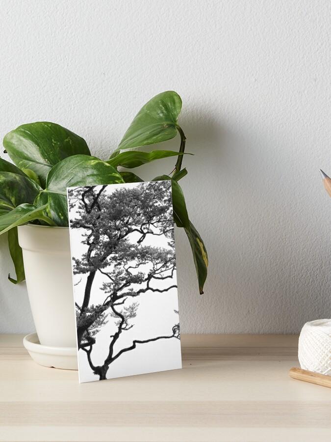 Bonsai Tree Black And White Bnw Bonsay Photography Japanese Tree Art Board Print By Kevinsingeisen Redbubble