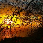Sunset tree embrace | Azores by LiriMor