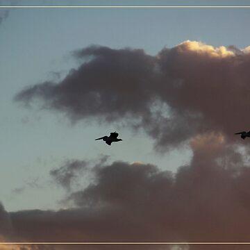Pelicans returning home by AlexDu