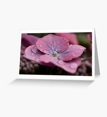 Lace Cap Hydrangea  Greeting Card