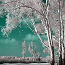 Alien Landscape by kjezt