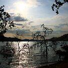 Lake Kaweah by Anne-Marie Bokslag