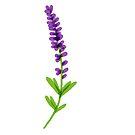 sprig of lavender by onceuponatimes