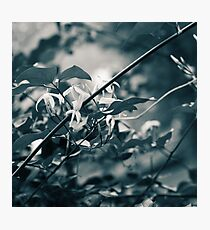 Shining Photographic Print