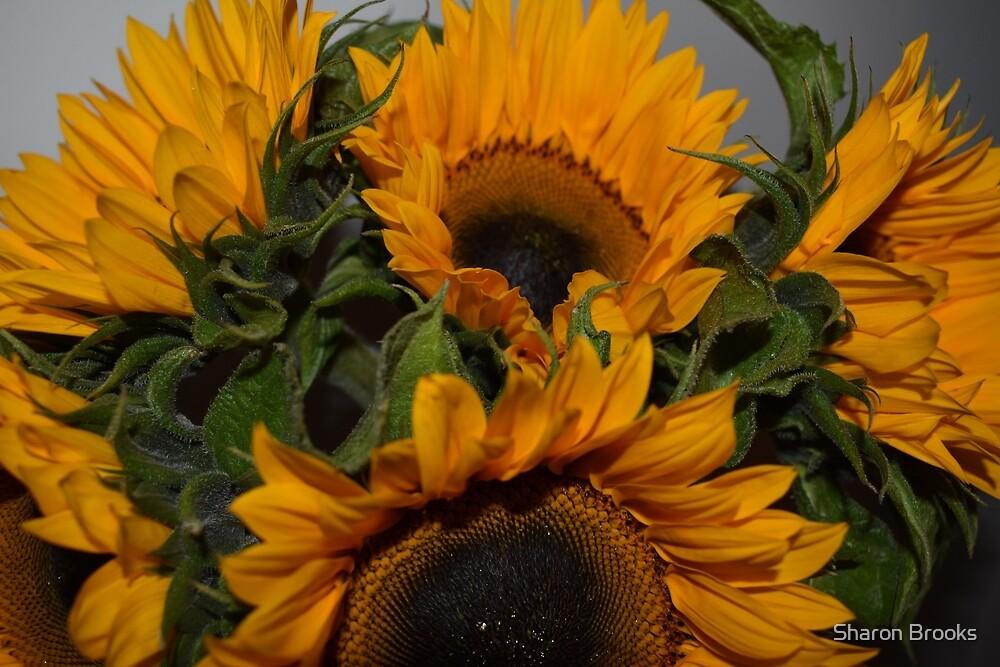 Sunflowers Shine On by Sharon Brooks