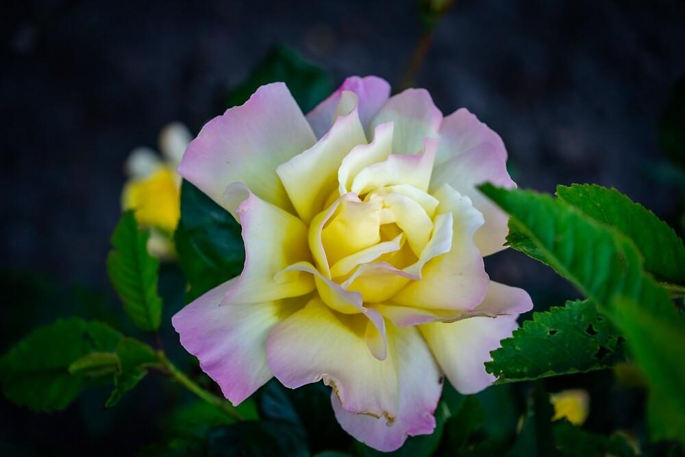 Flower by kulaone
