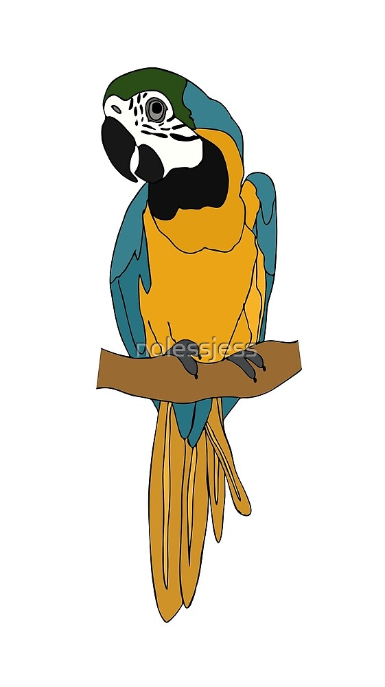 Blue and Gold Macaw by nolessjess