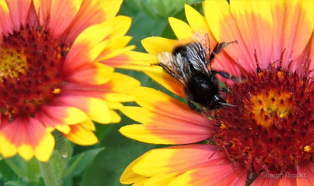 Bumble Bee at Work by Sharon Brooks