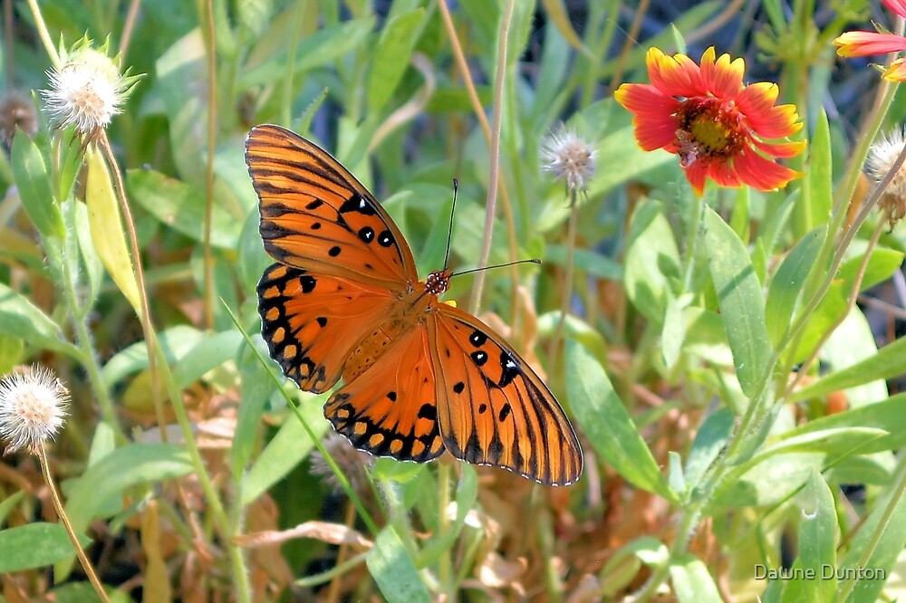 Fritillary Butterfly Among The Flowers by ©Dawne M. Dunton