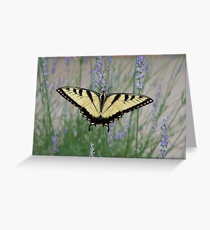 Lovin' the lavender Greeting Card