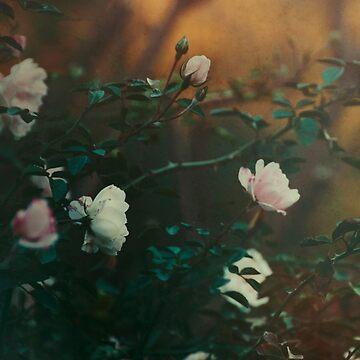 Sense Remain  by EmiBlackBox