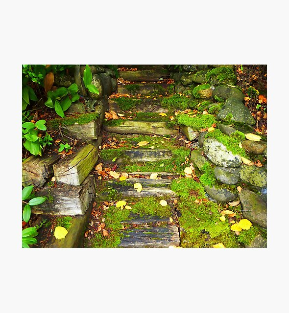 The Rocky Pathway by Vaengi