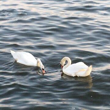 Swans by Kiluvi