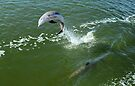 Dolphin  by Elaine Manley