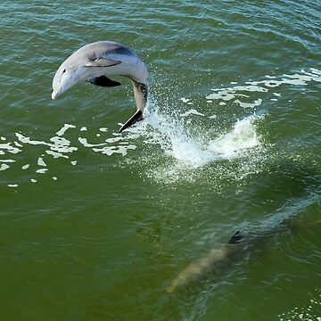 Dolphin  by Lucindawind