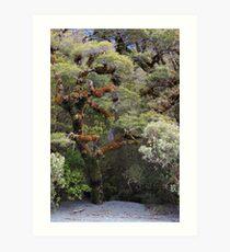 Fiordland 4 Art Print
