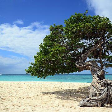 Aruba,tree by erozzz