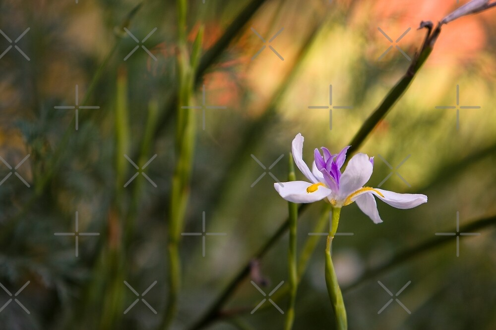 Flower on Stem with Blurred Background by Buckwhite