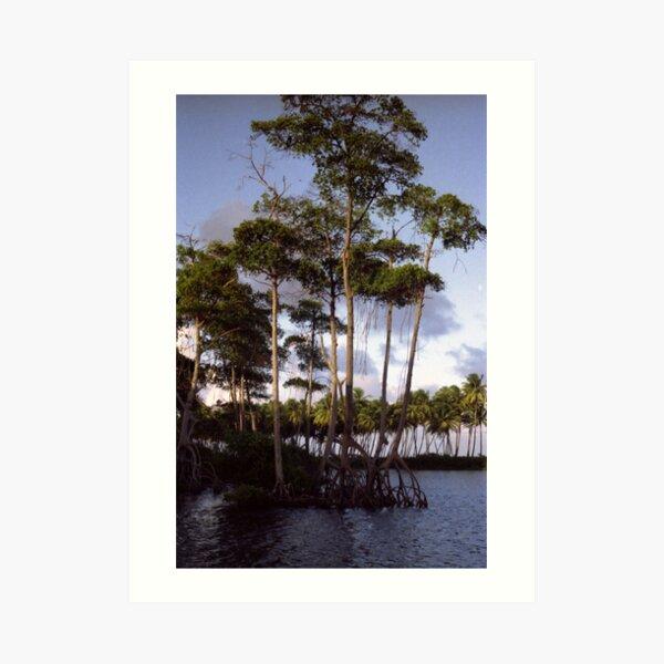 Mangrove Art Print