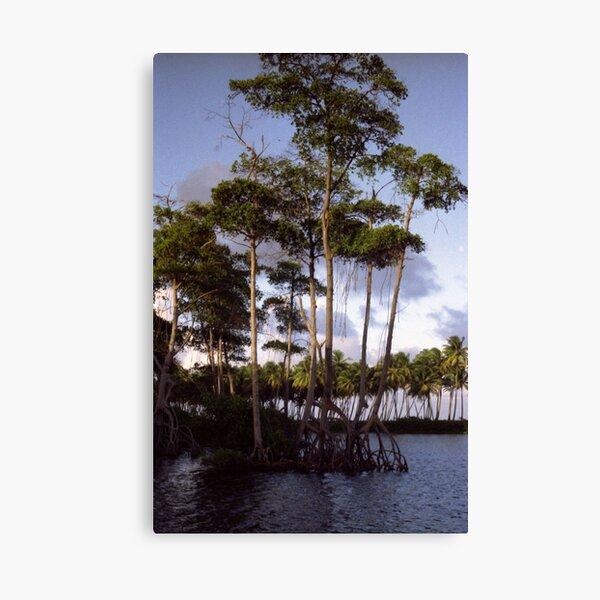 Mangrove Canvas Print