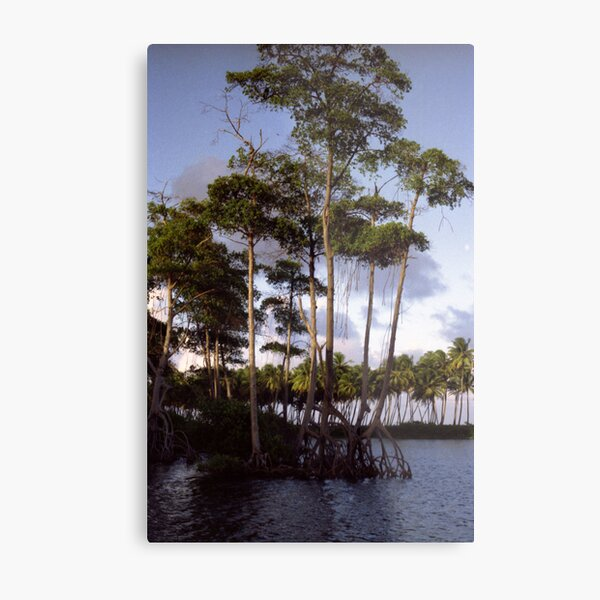 Mangrove Metal Print